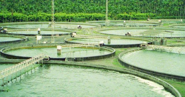 Chlorella orgânica une benefícios à saúde e ao meio ambiente