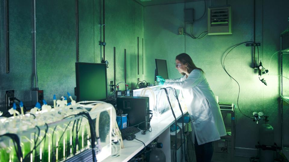 Chlorella Orgânica Laboratório de Inspeção