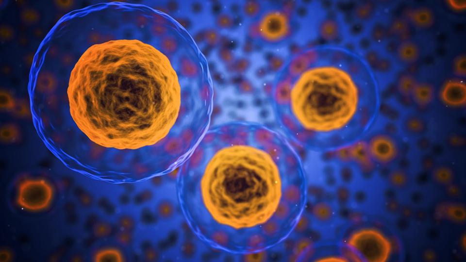 Como evitar efeitos negativos dos radicais livres no organismo